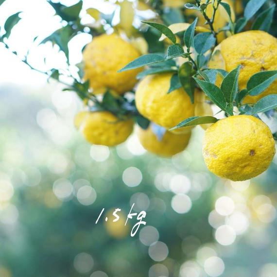 【ワケあり】天空の黄柚子 1.5kg