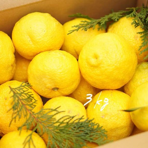 【ワケあり】天空の黄柚子 3kg