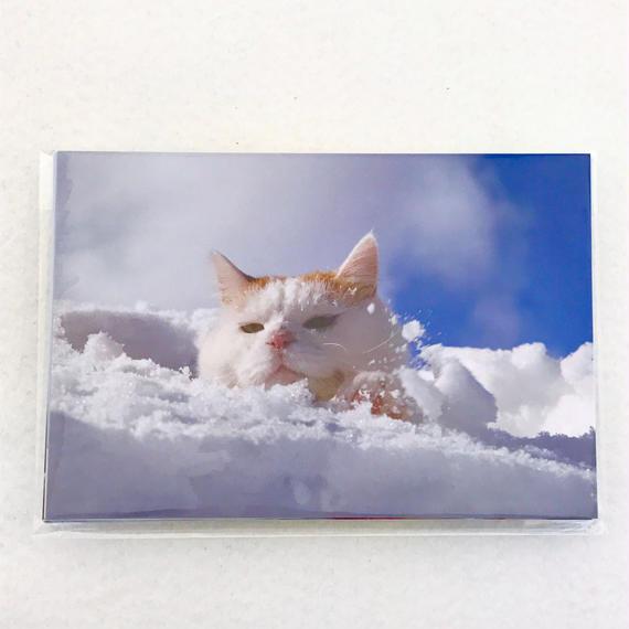 限定ポストカードセット【冬、かご猫の里-風の通り道-】(12枚入り)