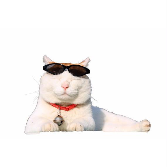 ほっぺにチュー ☆ かご猫しろの液晶フィルム☆【iPhone6 & iPhone7共用ver.】