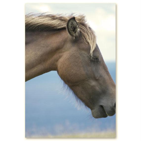 与那国馬ポストカード C