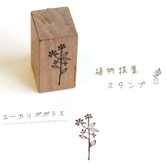 植物採集スタンプ:9『ユーカリポポラス』