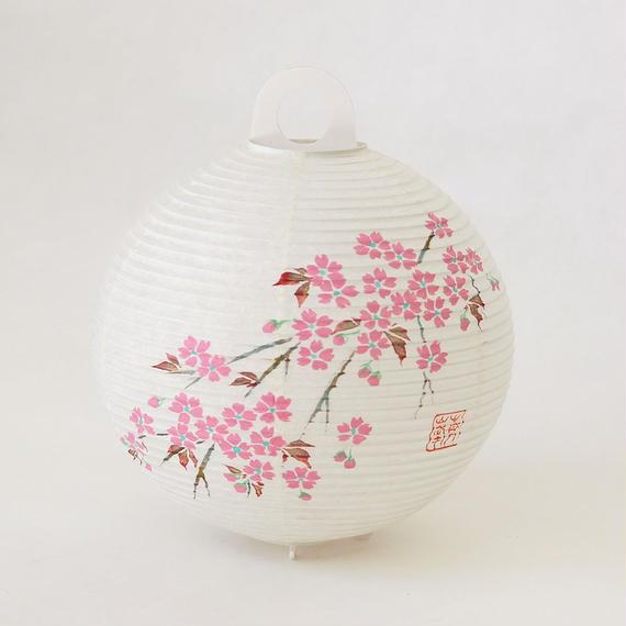 レター提灯 桜