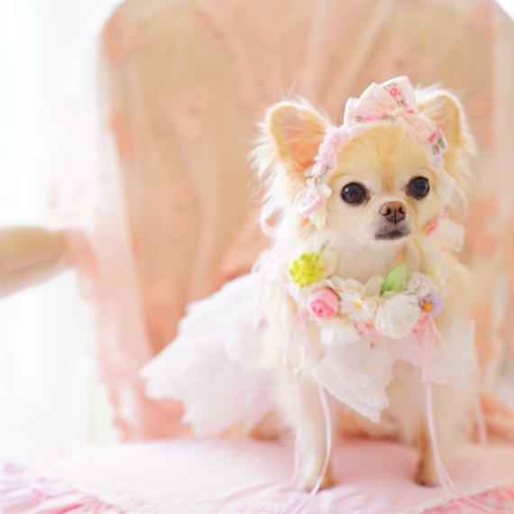 【Anniversary dress】Flower Girl Pink/Parti du Rubanさんコラボカチューシャセット/P,XS,Sサイズ