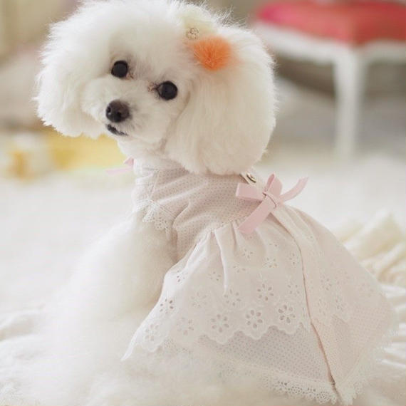 【 Picnic of Marie Antoinette】Trianon Princess(トリアノンプリンセス)サイズP/XS/S