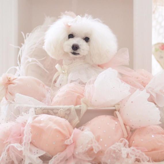 【 Candy Cushion 】キャンディー・クッション
