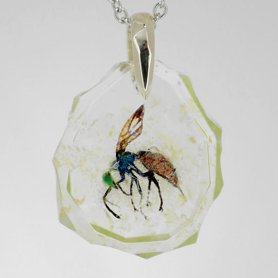 リンネセイボウ(bee011)