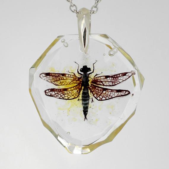 シオカラトンボ(dragonfly019)