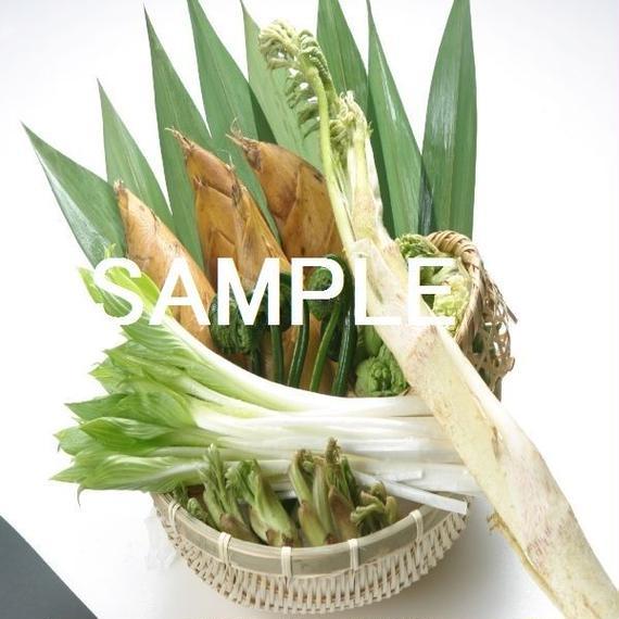 山菜・筍・うるい・こごみ