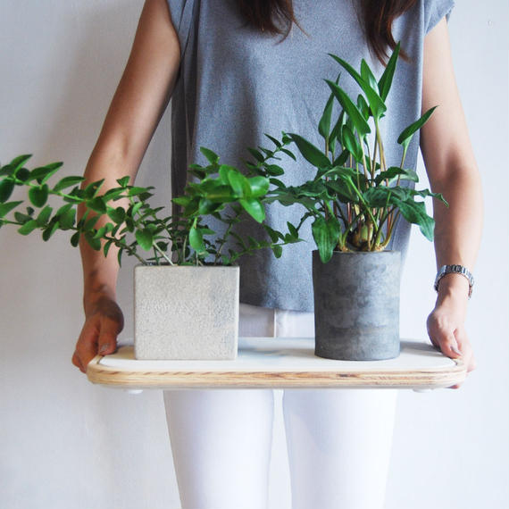 PLANTRAY