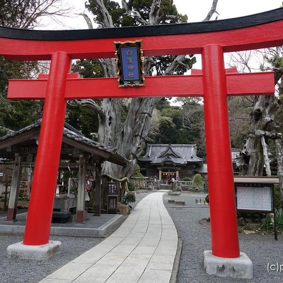 伊豆下田の白濱神社(白浜神社)鳥居より(2)[商用利用OK]
