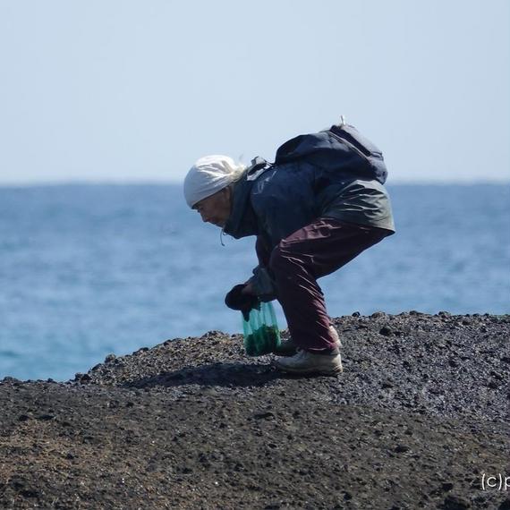 白浜海岸で岩海苔を採る老婆の姿 [商用利用OK]