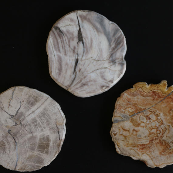 Petrified Wood Coaster(White)