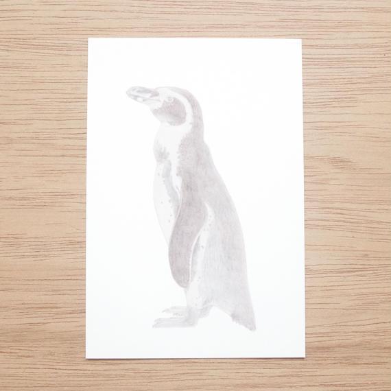 白井裕子 ポストカード ペンギン