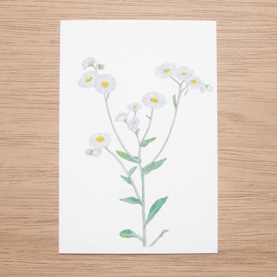 白井裕子  ポストカード  植物