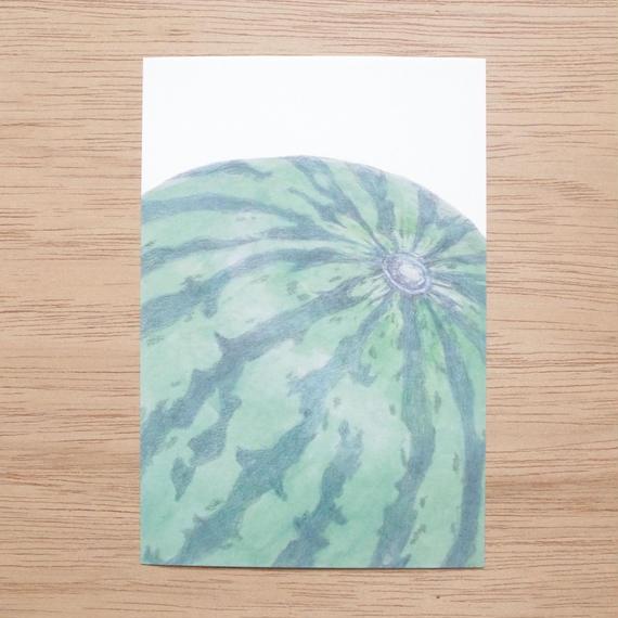 白井裕子  ポストカード  スイカ