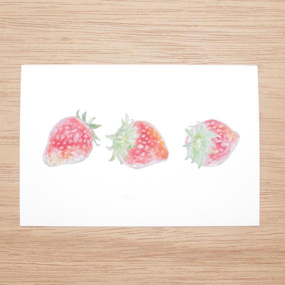 白井裕子  ポストカード  いちご