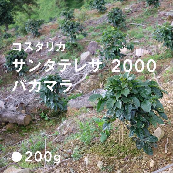 コスタリカ サンタテレサ 2000 パカマラ / 浅煎り (High Roast)