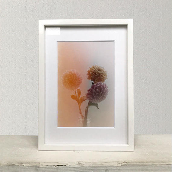 Flower Collecting PHOTO-PRINT(No.1)