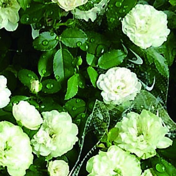 グリーンアイス【8/6青空個展出店GREEN】