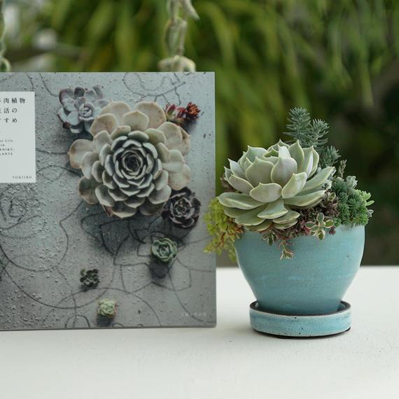 2018 Mothers DAY TOKIIRO little world  + 多肉植物生活のすすめ