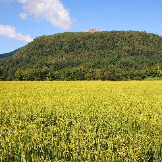 低農薬米【ななつぼし】10kg