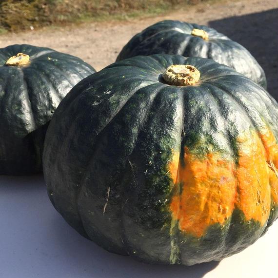 しっとり絶品かぼちゃ!20kg