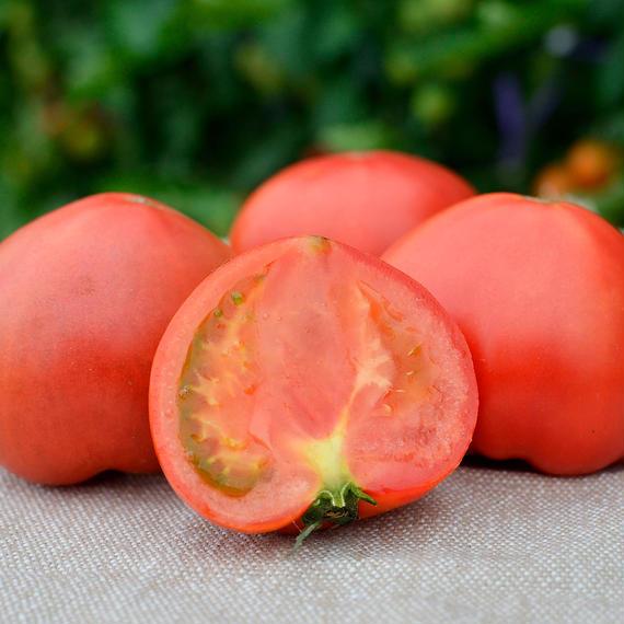 こだわりフルーツトマト 【特選】1箱(約2.5~3kg)