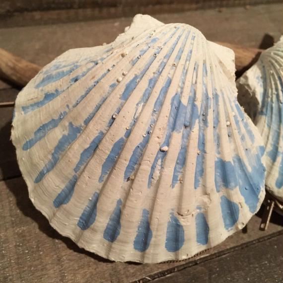 シェル コインケース  Blue