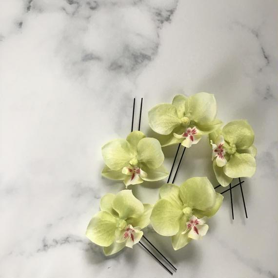 胡蝶蘭 ヘアピン