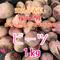 【ビーツ1.2kg】食べる輸血!スーパーフード栽培中農薬化学肥料不使用【九州・福岡県産】