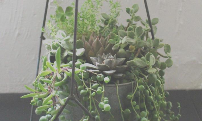 Green & Succulent  グリーン