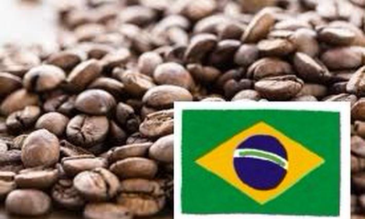 ブラジル豆