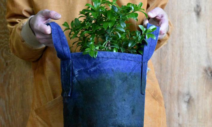 植物 オーストラリア