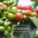 タンザニア マムサラ・ジュAA 200g