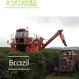 ブラジル  ダテーラ農園 100g