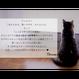 かわいいネコのマルチケース♥