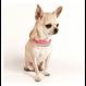 Mademoiselle Dog Collar PINK