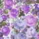 GRUNGE FLOWER TEXTURES VOL,1