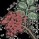ティムールペッパー(花椒)