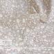Sunny Land -soft grey (CO912467 E)【ダブルガーゼ】