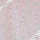 Neko Cafe -pink (CO112538 C)