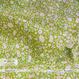 Sunny Land -fresh green (CO912467 A)【ダブルガーゼ】