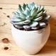 Matte white bowl pot