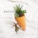 キャロット★succulent★