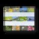 野鳥写真カレンダー BIRDS IN SEASONS 2018