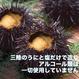 【岩手県産】甘塩うに (赤)バフンウニ 60g/本【送料無料】