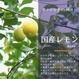 国産(熊本県産)ハウス栽培レモン1kg【良品】【量り売り】|有名デパートで夏のオリジナルギフトとしてジェラートにもなった美味しいレモン♪【産直便】