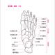 こう読む基礎単 解剖生理学編 第3版