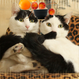 のせてのせ猫 アプリゲームに参上!